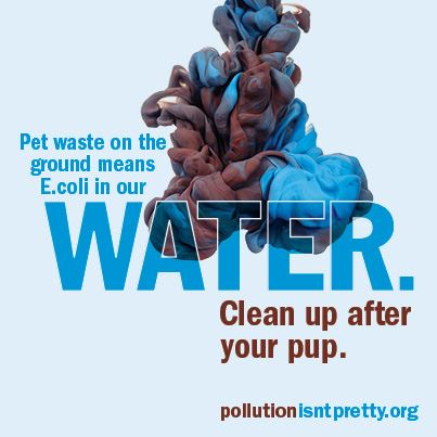 Pet waste means E. Coli in water