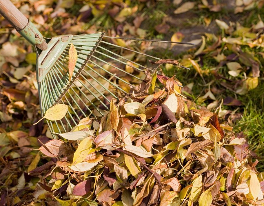 Picture of leaves and a rake