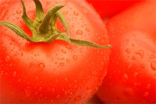 Upclose image of tomatoes